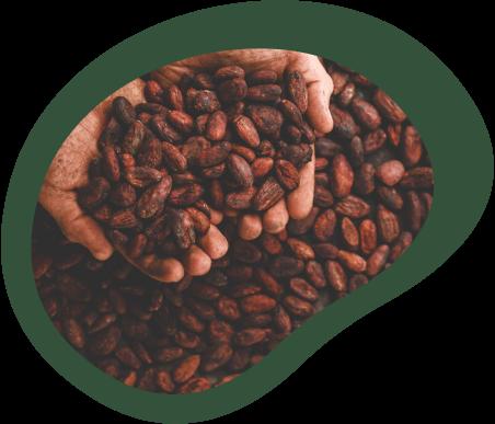 Chocolate de origem