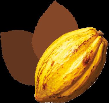 Cookoa